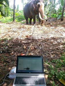 IoT for elephants-human conflict
